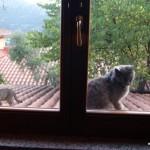 Man hat uns am Fenster entdeckt
