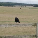 Birdspotting: Wer beobachtet wen?