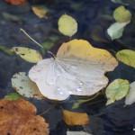 Herbststimmung im Detail