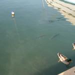 Fische und Enten im Hafen