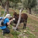 Immer wieder: Annette und Esel