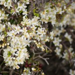 Blütenpracht findet sich nur im Detail