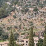 Überall Oliventerassen