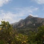 Zitrusfrüchte und Berge
