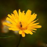 Sowas von gelb