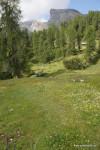 Blumenwiese bei der Gherdenacia-Hütte