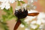 Fließiges Bienchen (?)