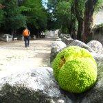 Seltsame Früchte auf den Alyscamps