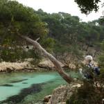 Calanque Port Pin