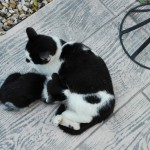 Katzenfamilie am Abend