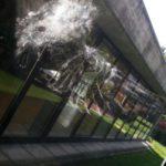 Vogelschlag an Scheibe im Museum