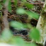 29.05.: Irgendwas mit Federn räkelt sich im Nest
