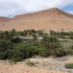Flussoase am Oued Ziz